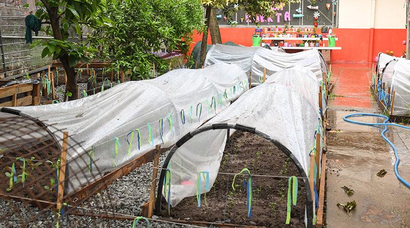 San Fernando junto al Colegio Madre Rafaela en el proyecto de una huerta natural orgánica