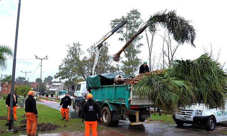 Para propagar un ambiente más sustentable, el Municipio plantó más de 1.500 árboles en todo Tigre