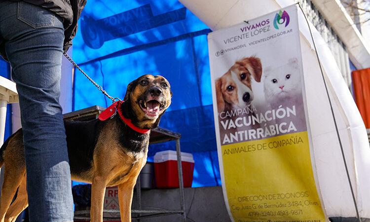 Nueva jornada de vacunación antirrábica gratuita