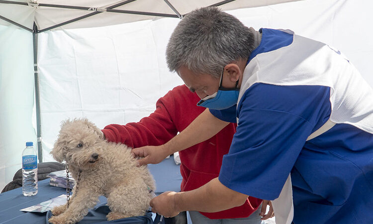 Dónde se puede tramitar la tarjeta ciudadana y vacunar mascotas